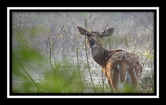 Description: Deer Park